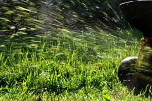 What should I do with grass clippings?